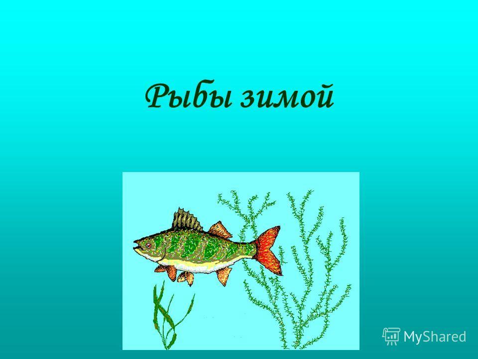 Рыбы зимой