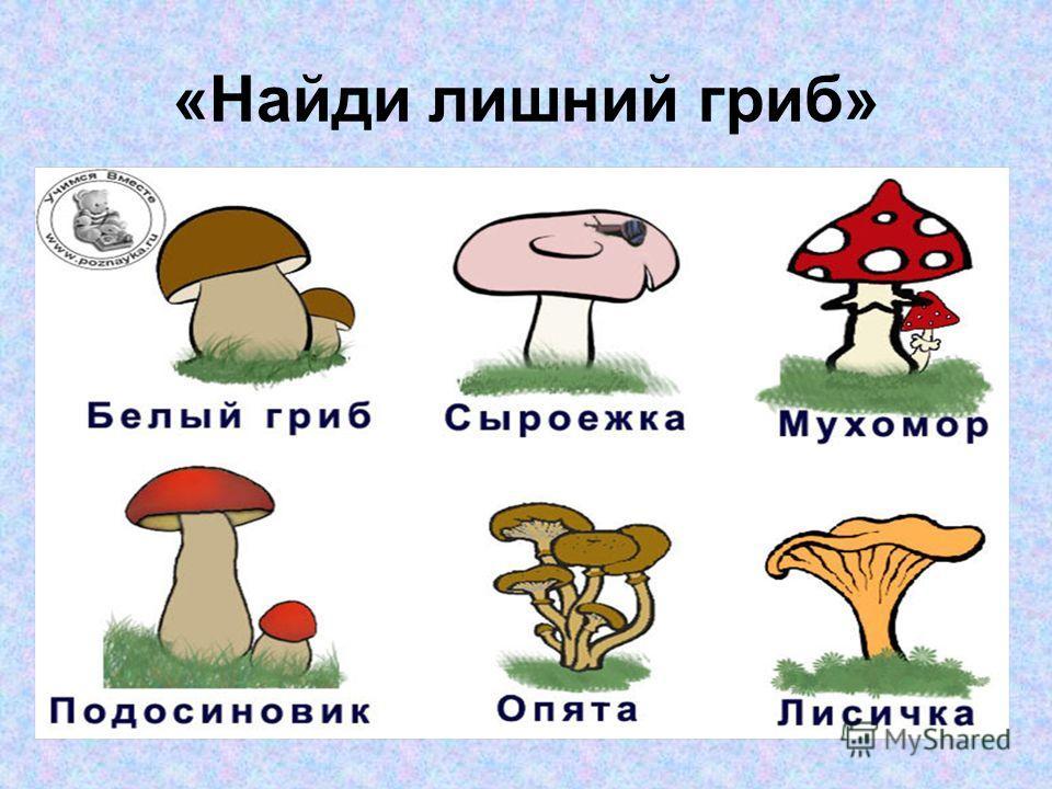 Несъедобные грибы желчный гриб ложные опята мухомор бледная поганка