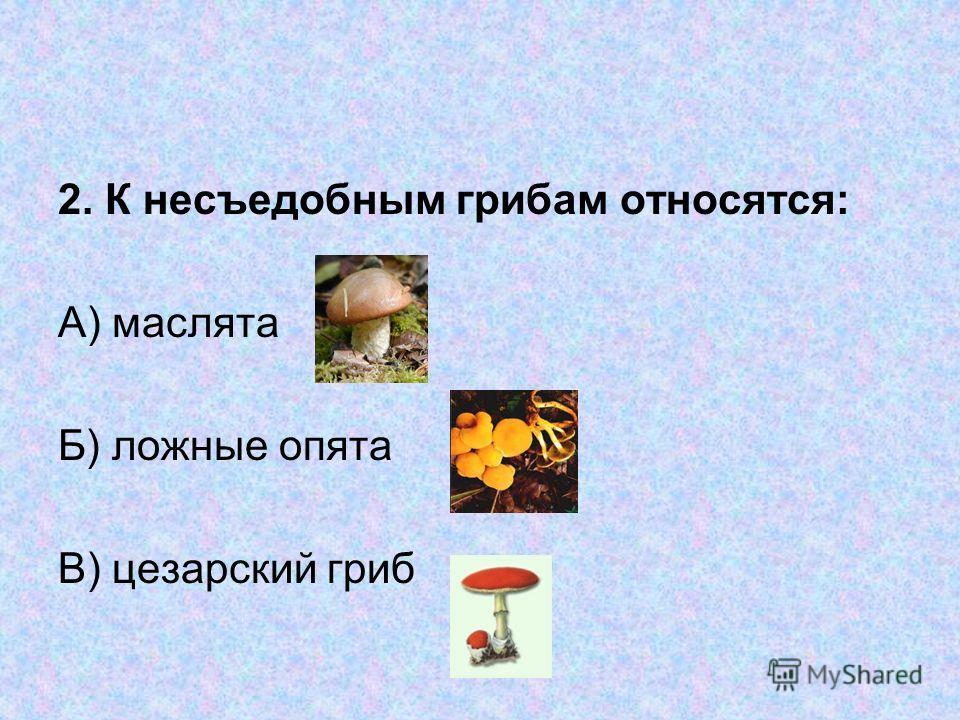 тест 1. К съедобным грибам относится: А) белый гриб Б) бледная поганка В)опята
