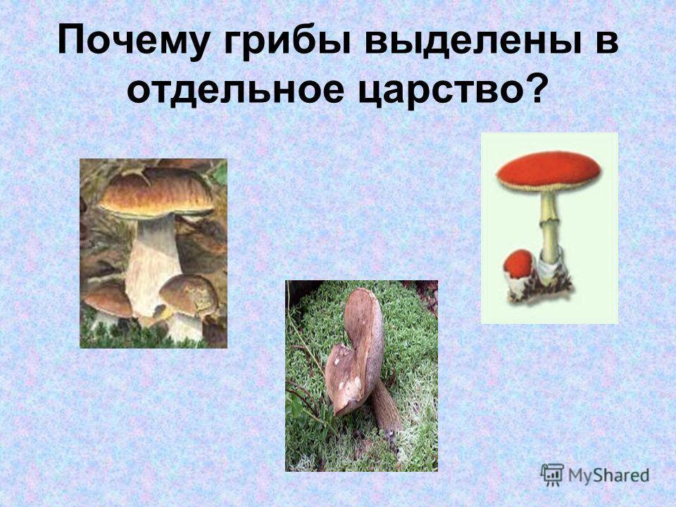Познакомимся: со строением грибов; с разнообразием грибов; с отличительными признаками; с правилами сбора грибов.