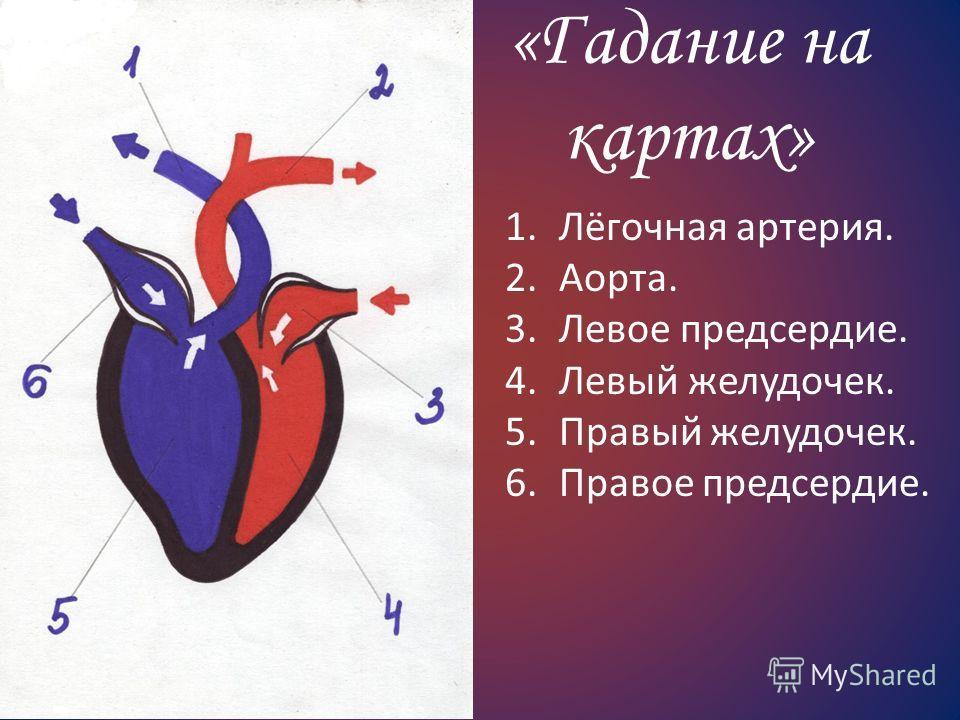 «Гадание на картах» 1.Лёгочная артерия. 2.Аорта. 3.Левое предсердие. 4.Левый желудочек. 5.Правый желудочек. 6.Правое предсердие.