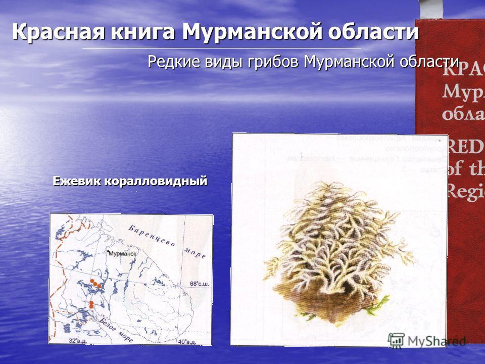 Красная книга Мурманской области Редкие виды грибов Мурманской области Ежевик коралловидный