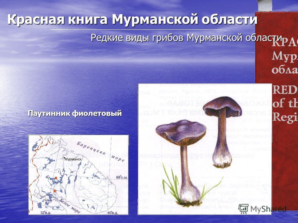 Красная книга Мурманской области Редкие виды грибов Мурманской области Паутинник фиолетовый