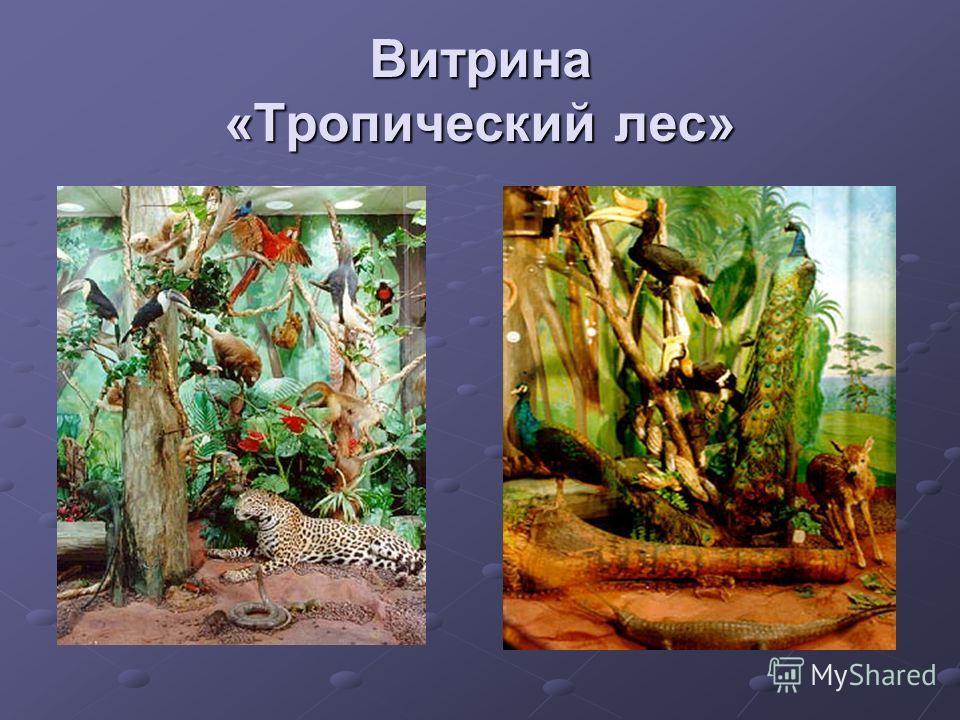 Витрина «Тропический лес»