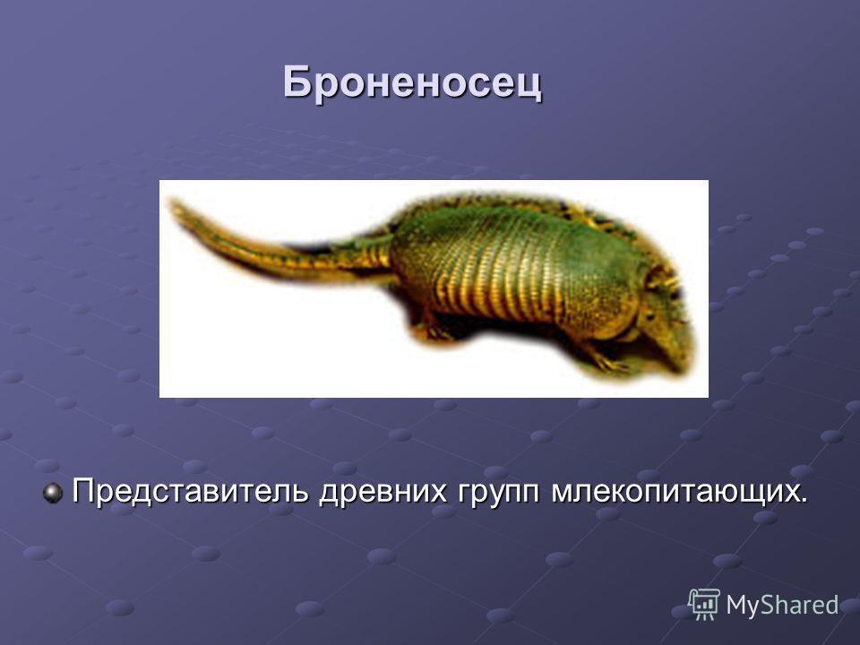 Броненосец Представитель древних групп млекопитающих.
