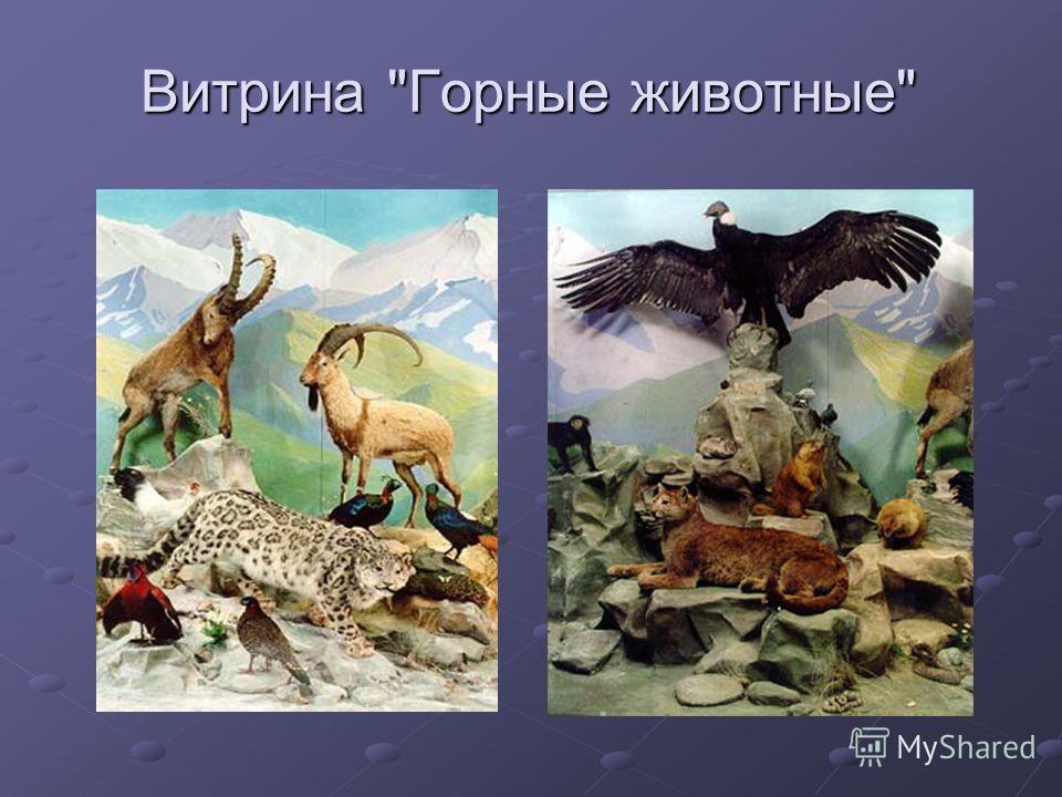 Витрина Горные животные
