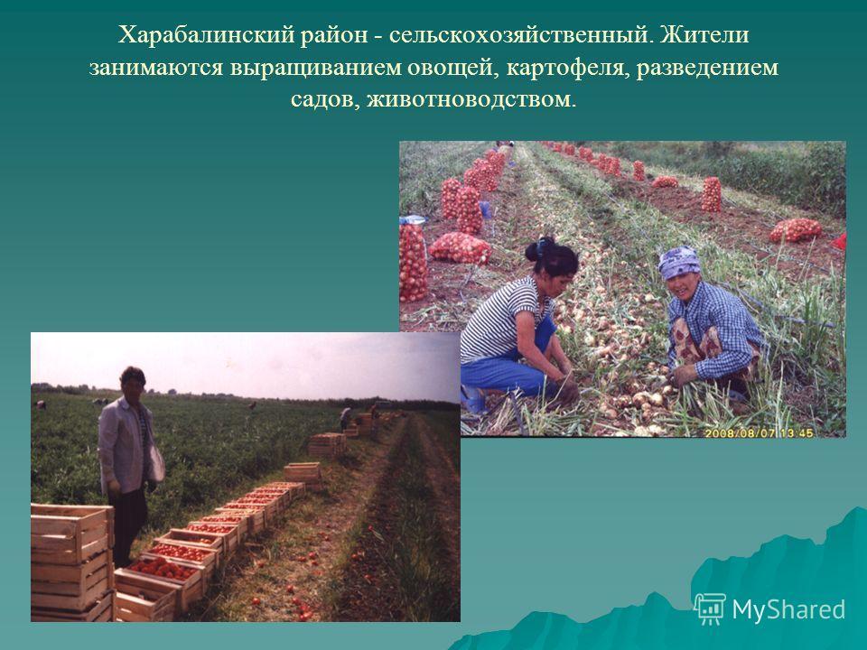 Харабалинский район - сельскохозяйственный. Жители занимаются выращиванием овощей, картофеля, разведением садов, животноводством.