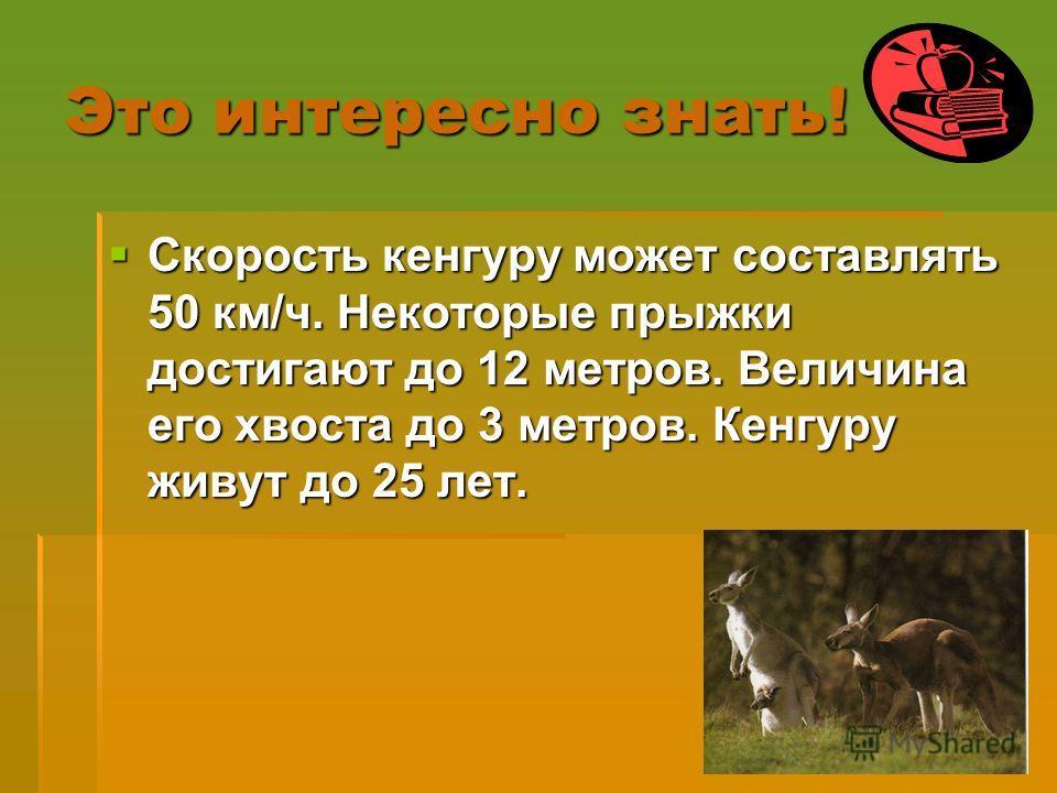 Это интересно знать! Скорость кенгуру может составлять 50 км/ч. Некоторые прыжки достигают до 12 метров. Величина его хвоста до 3 метров. Кенгуру живут до 25 лет. Скорость кенгуру может составлять 50 км/ч. Некоторые прыжки достигают до 12 метров. Вел