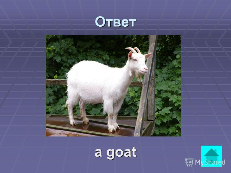 Вопрос It is not a very big animal. It has got two horns. It eats grass, leaves, flowers. It gives milk. ответ