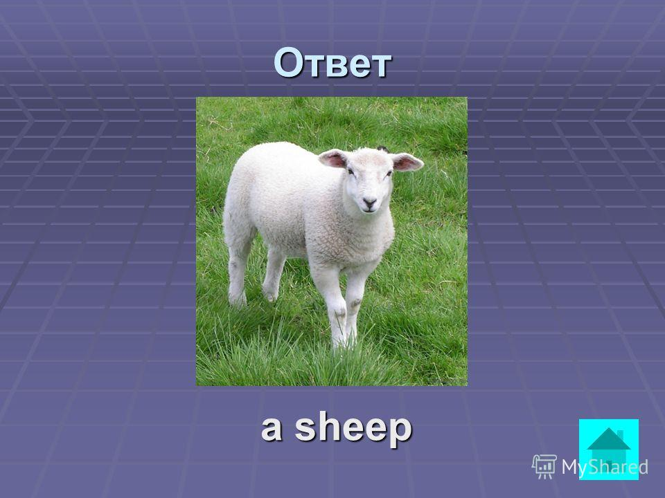 It is not very big. It eats grass. It gives us wool. ответВопрос