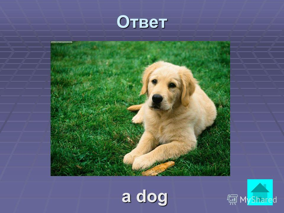 It can be big or small. It can run, jump and swim. It likes meat and bones. It is a good friend. ответВопрос