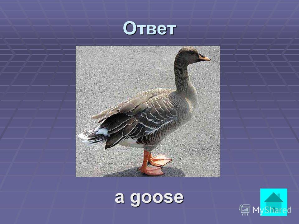 Вопрос It is a big bird. It lives on a farm. It can also be wild. It can fly long. It swims very well. It is grey or white. Its beak is long. ответ