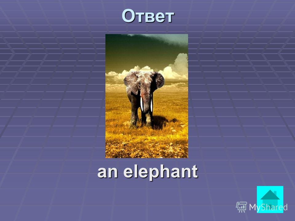 It is very big. It lives in Africa and India. It eats grass, bananas and carrots. It drinks water. It likes milk. Hes got a long trunk and long tusks. ответВопрос