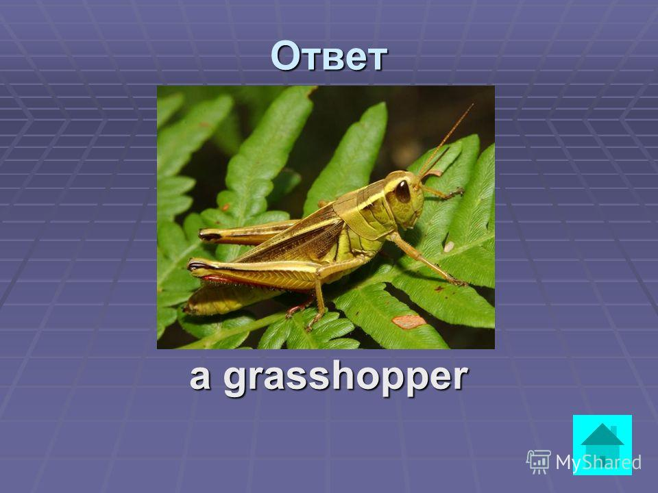 Вопрос It is green. It lives in grass. It does not walk, it hops. ответ
