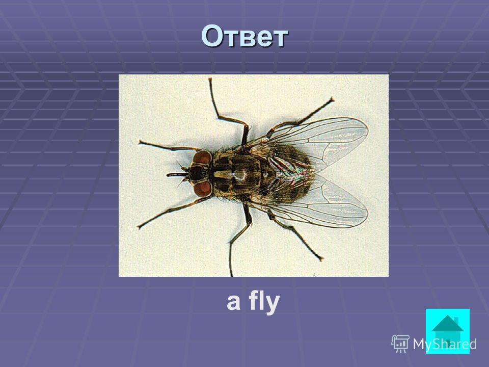 Вопрос It has two big wings. It is black and likes eating plants and flowers. It can see and hear very well. ответ