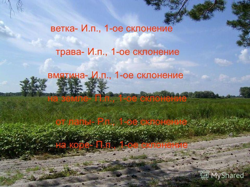 ветка- И.п., 1-ое склонение трава- И.п., 1-ое склонение вмятина- И.п., 1-ое склонение на земле- П.п., 1-ое склонение от лапы- Р.п., 1-ое склонение на коре- П.п., 1-ое склонение