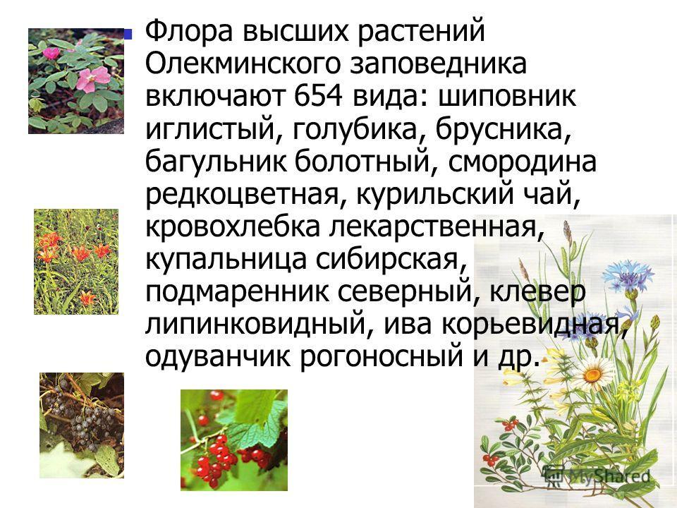 Флора высших растений Олекминского заповедника включают 654 вида: шиповник иглистый, голубика, брусника, багульник болотный, смородина редкоцветная, курильский чай, кровохлебка лекарственная, купальница сибирская, подмаренник северный, клевер липинко