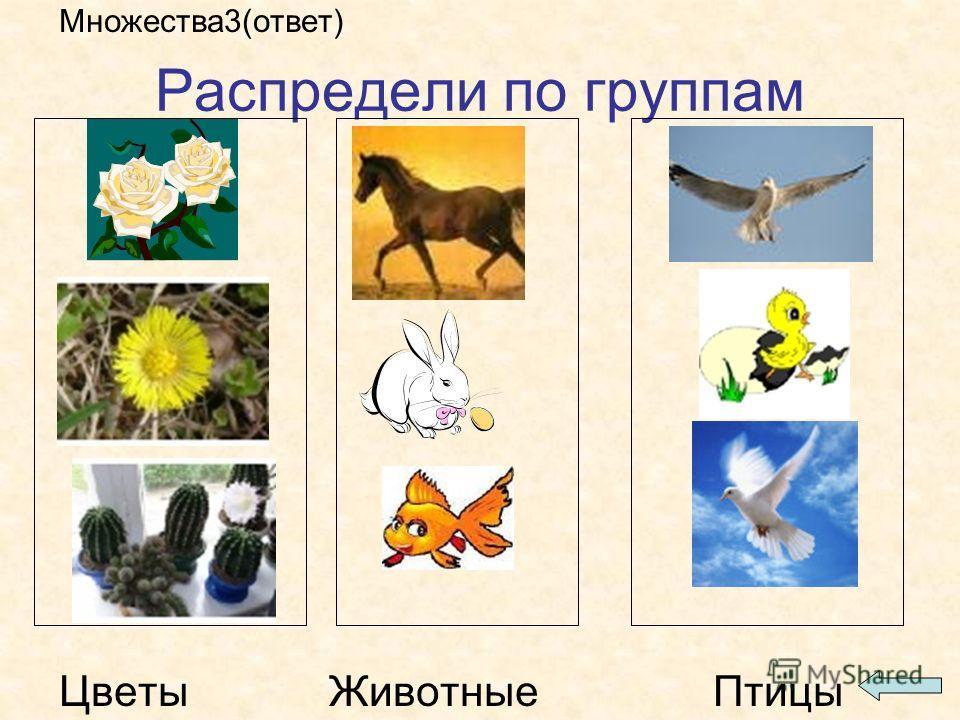 Распредели по группам Множества3(ответ) Цветы Животные Птицы