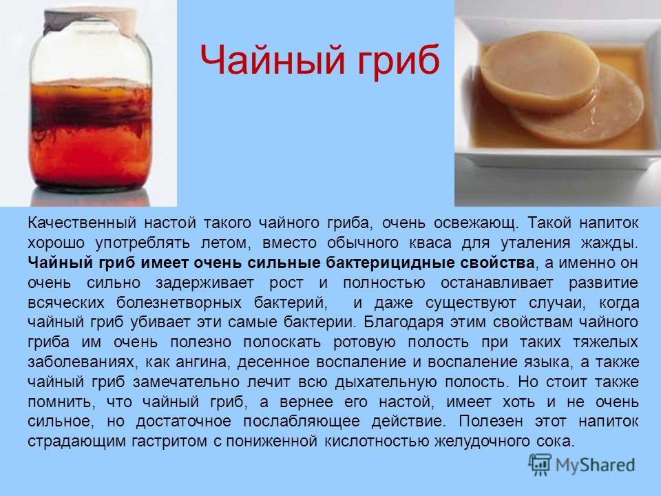 Чайный гриб Качественный настой такого чайного гриба, очень освежающ. Такой напиток хорошо употреблять летом, вместо обычного кваса для уталения жажды. Чайный гриб имеет очень сильные бактерицидные свойства, а именно он очень сильно задерживает рост