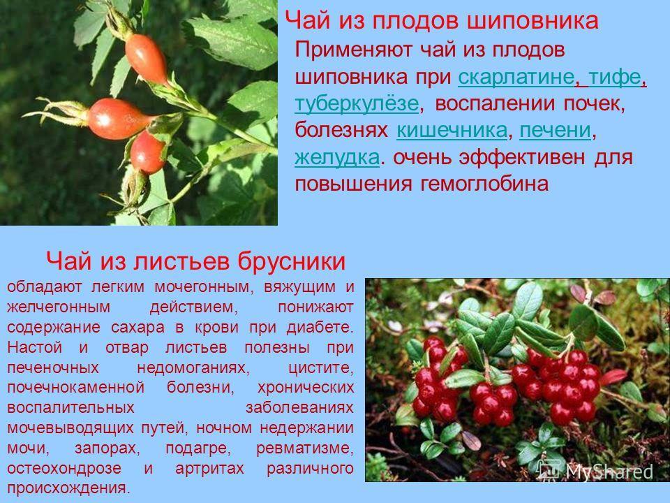 Применяют чай из плодов шиповника при скарлатине, тифе, туберкулёзе, воспалении почек, болезнях кишечника, печени, желудка. очень эффективен для повышения гемоглобинаскарлатинетифе туберкулёзекишечникапечени желудка Чай из плодов шиповника Чай из лис