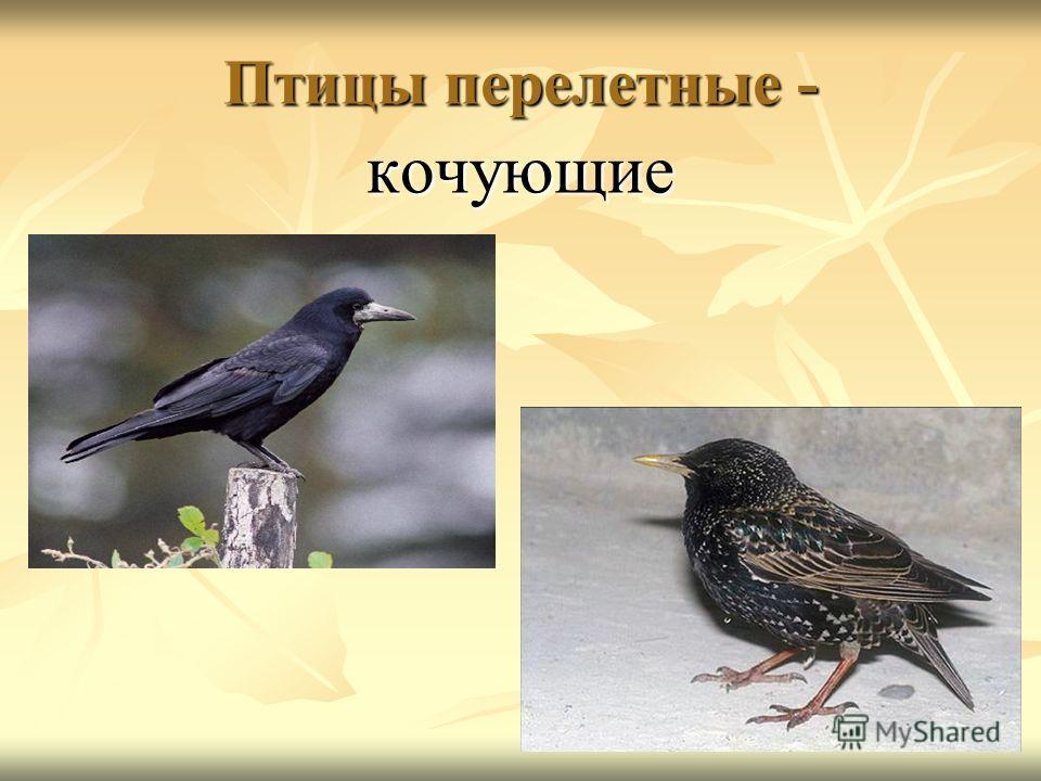 Птицы перелетные - кочующие