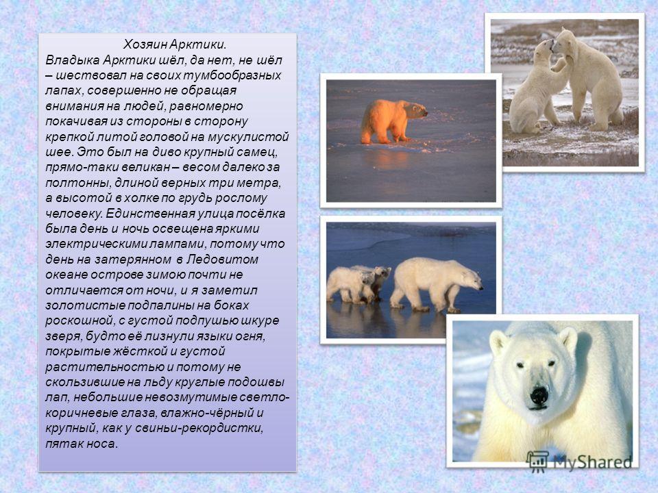 Хозяин Арктики. Владыка Арктики шёл, да нет, не шёл – шествовал на своих тумбообразных лапах, совершенно не обращая внимания на людей, равномерно покачивая из стороны в сторону крепкой литой головой на мускулистой шее. Это был на диво крупный самец,