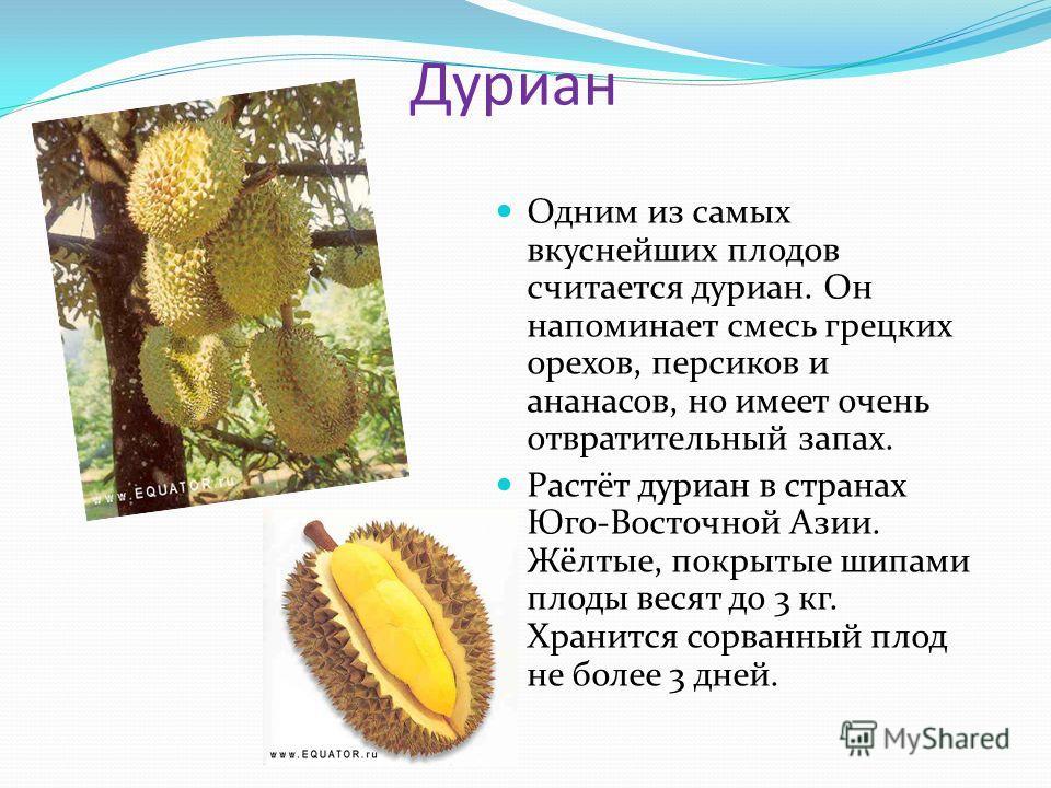 Дуриан Одним из самых вкуснейших плодов считается дуриан. Он напоминает смесь грецких орехов, персиков и ананасов, но имеет очень отвратительный запах. Растёт дуриан в странах Юго-Восточной Азии. Жёлтые, покрытые шипами плоды весят до 3 кг. Хранится