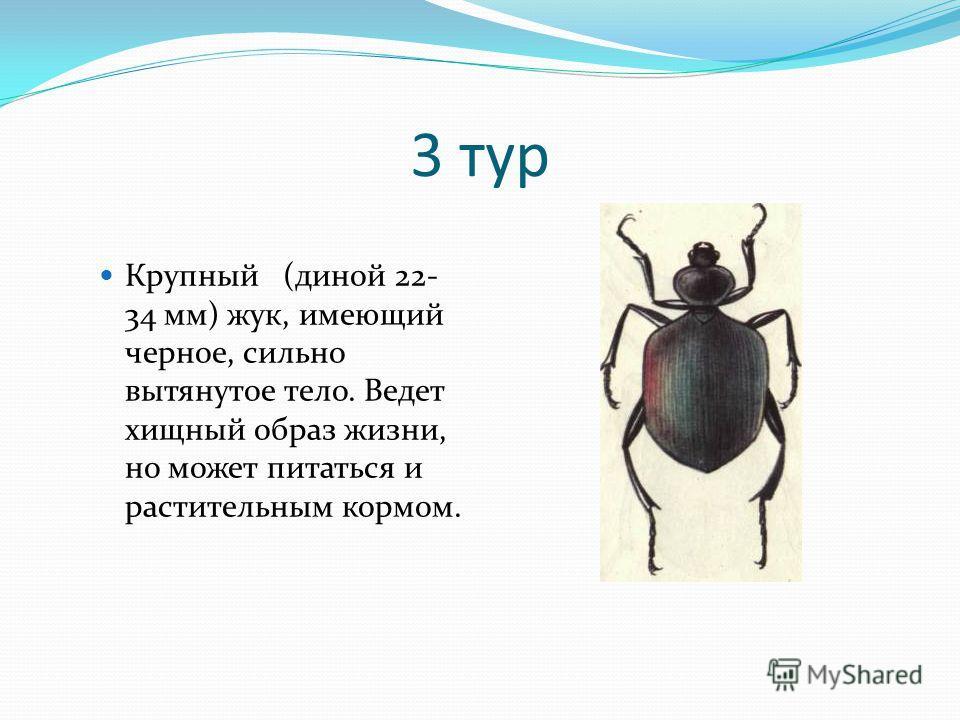3 тур Крупный (диной 22- 34 мм) жук, имеющий черное, сильно вытянутое тело. Ведет хищный образ жизни, но может питаться и растительным кормом.