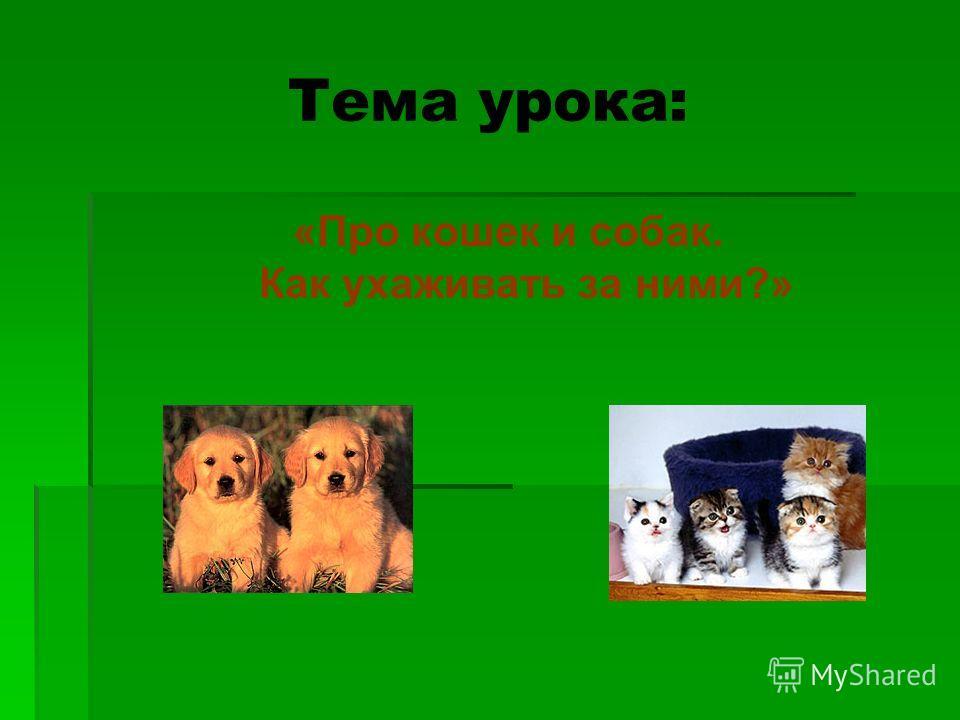 «Про кошек и собак. Как ухаживать за ними?» Тема урока: