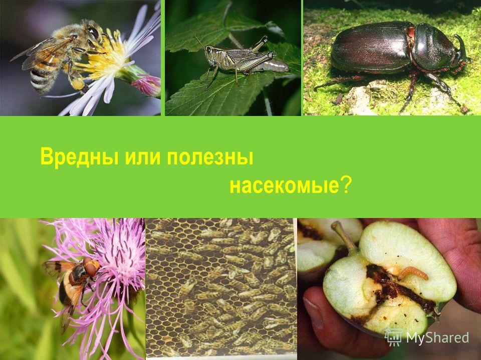 Вредны или полезны насекомые ?