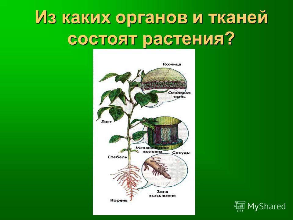 Из каких органов и тканей состоят растения?
