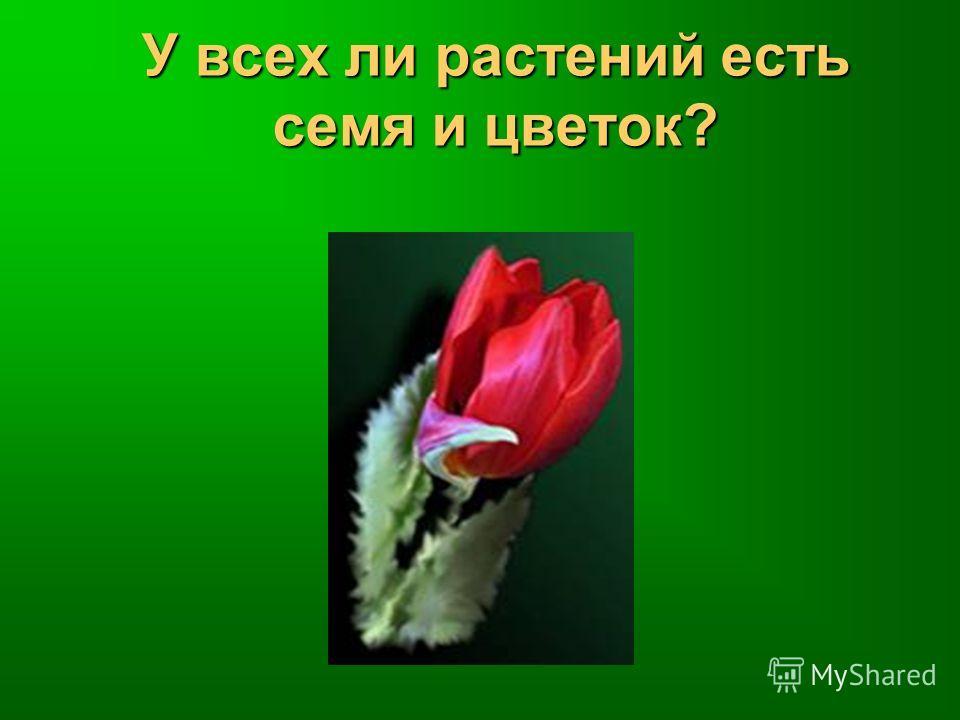 У всех ли растений есть семя и цветок?