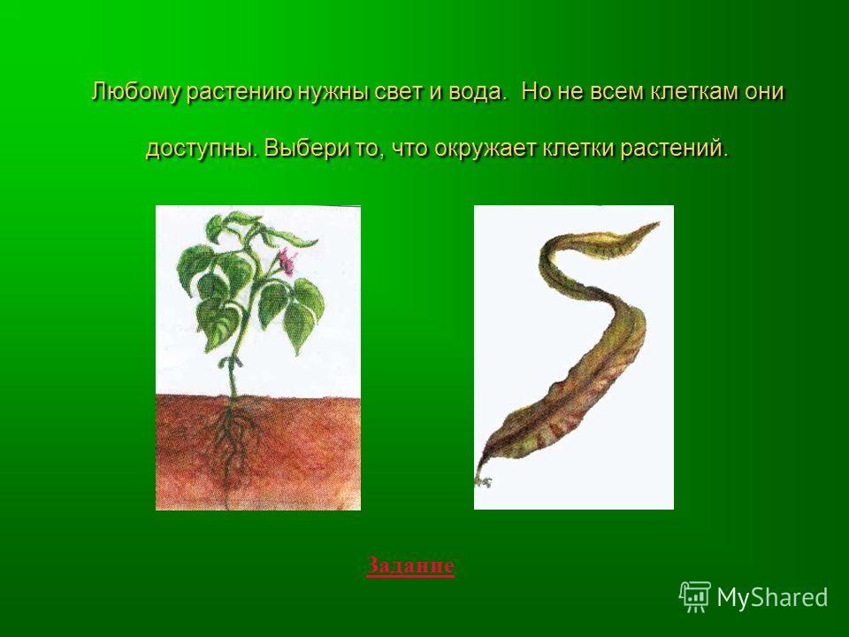 Любому растению нужны свет и вода. Но не всем клеткам они доступны. Выбери то, что окружает клетки растений. Задание