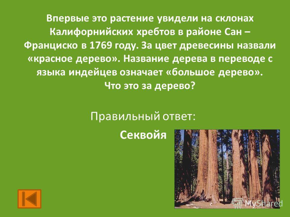 Впервые это растение увидели на склонах Калифорнийских хребтов в районе Сан – Франциско в 1769 году. За цвет древесины назвали «красное дерево». Название дерева в переводе с языка индейцев означает «большое дерево». Что это за дерево? Правильный отве