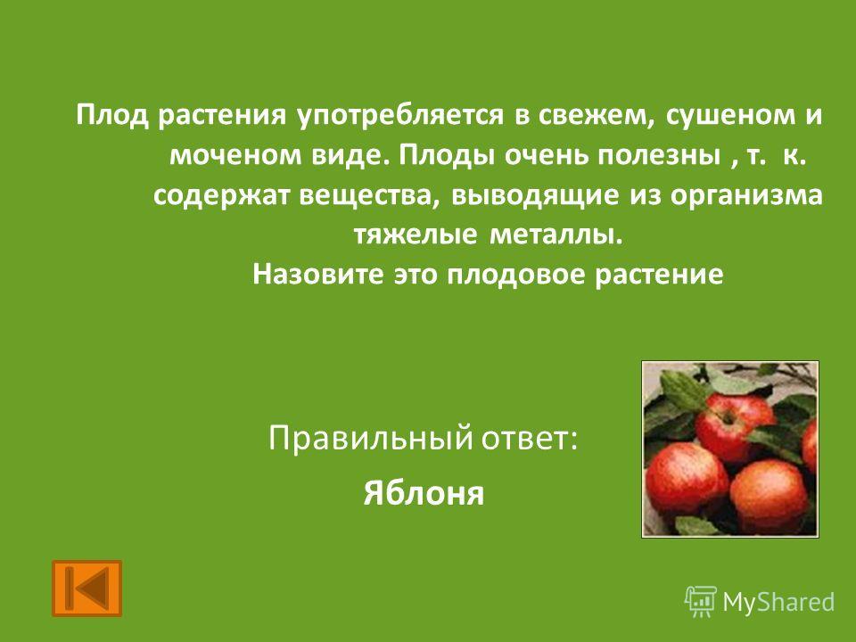 Плод растения употребляется в свежем, сушеном и моченом виде. Плоды очень полезны, т. к. содержат вещества, выводящие из организма тяжелые металлы. Назовите это плодовое растение Правильный ответ: Яблоня