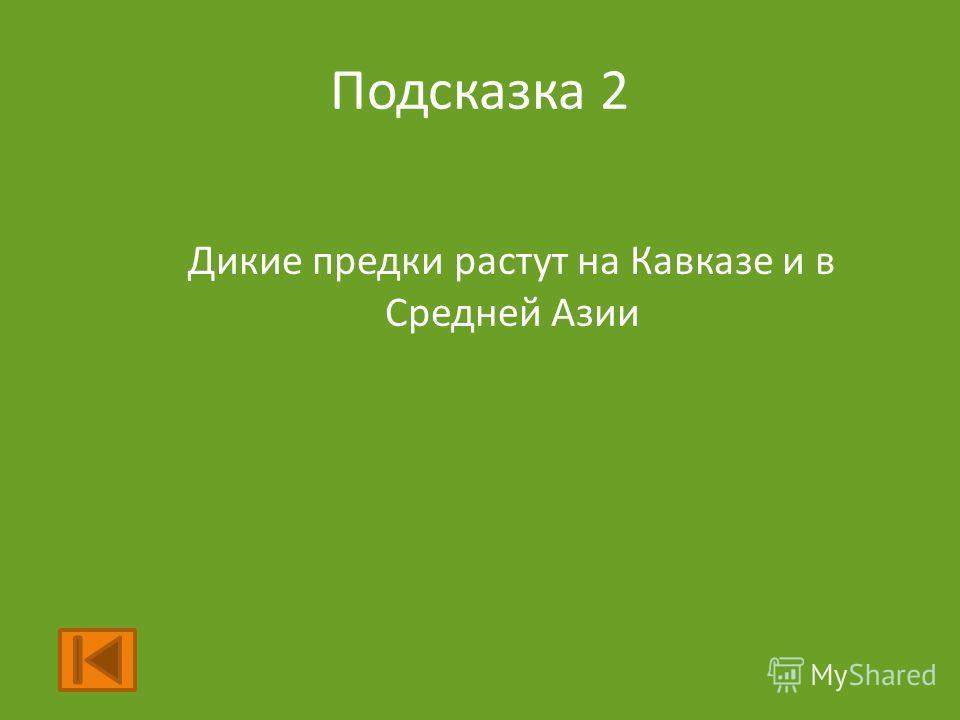 Подсказка 2 Дикие предки растут на Кавказе и в Средней Азии