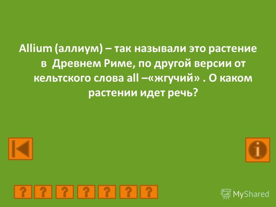 Allium (аллиум) – так называли это растение в Древнем Риме, по другой версии от кельтского слова all –«жгучий». О каком растении идет речь?