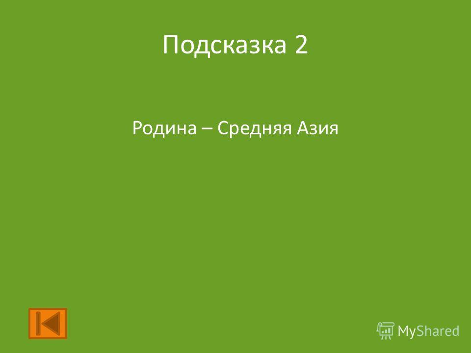 Подсказка 2 Родина – Средняя Азия