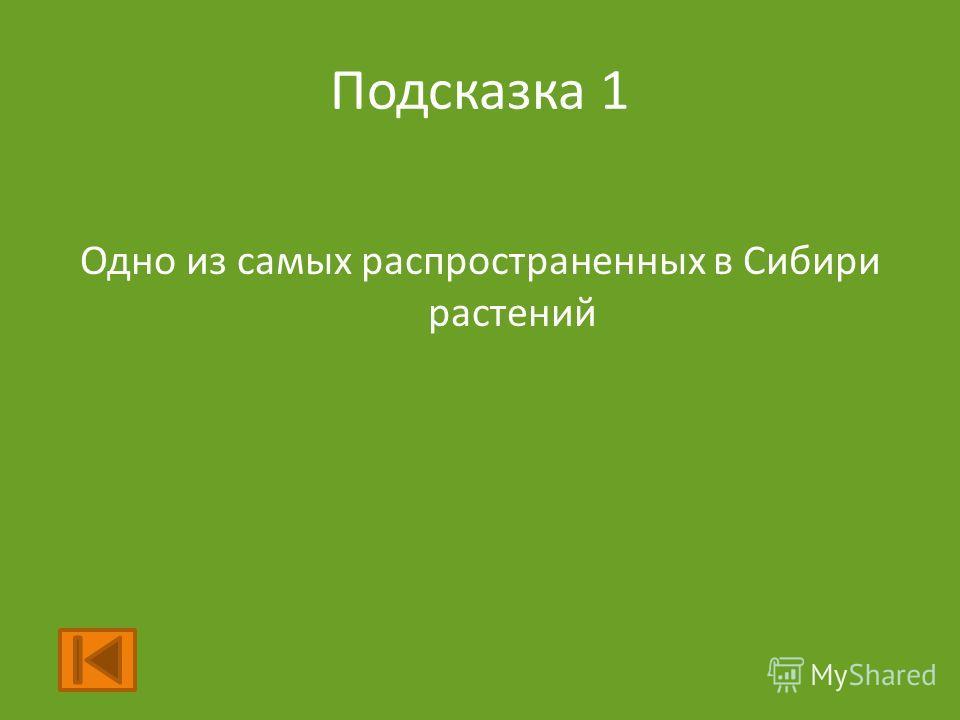 Подсказка 1 Одно из самых распространенных в Сибири растений