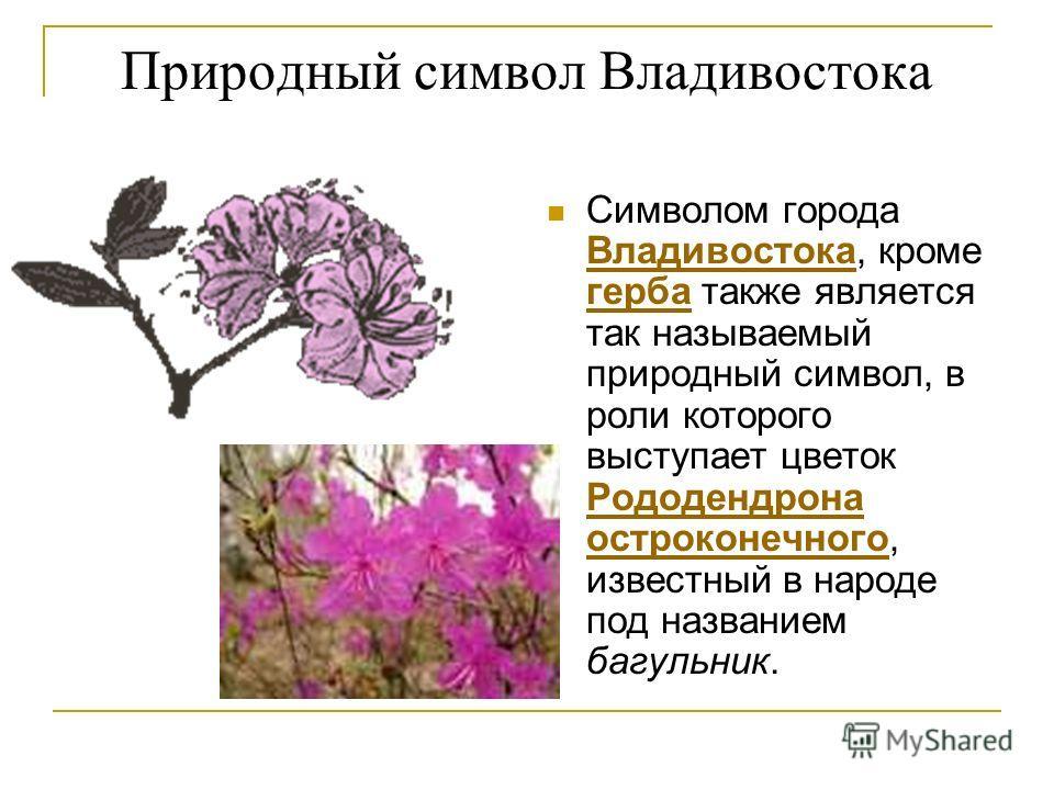 Природный символ Владивостока Символом города Владивостока, кроме герба также является так называемый природный символ, в роли которого выступает цветок Рододендрона остроконечного, известный в народе под названием багульник. Владивостока герба Родод