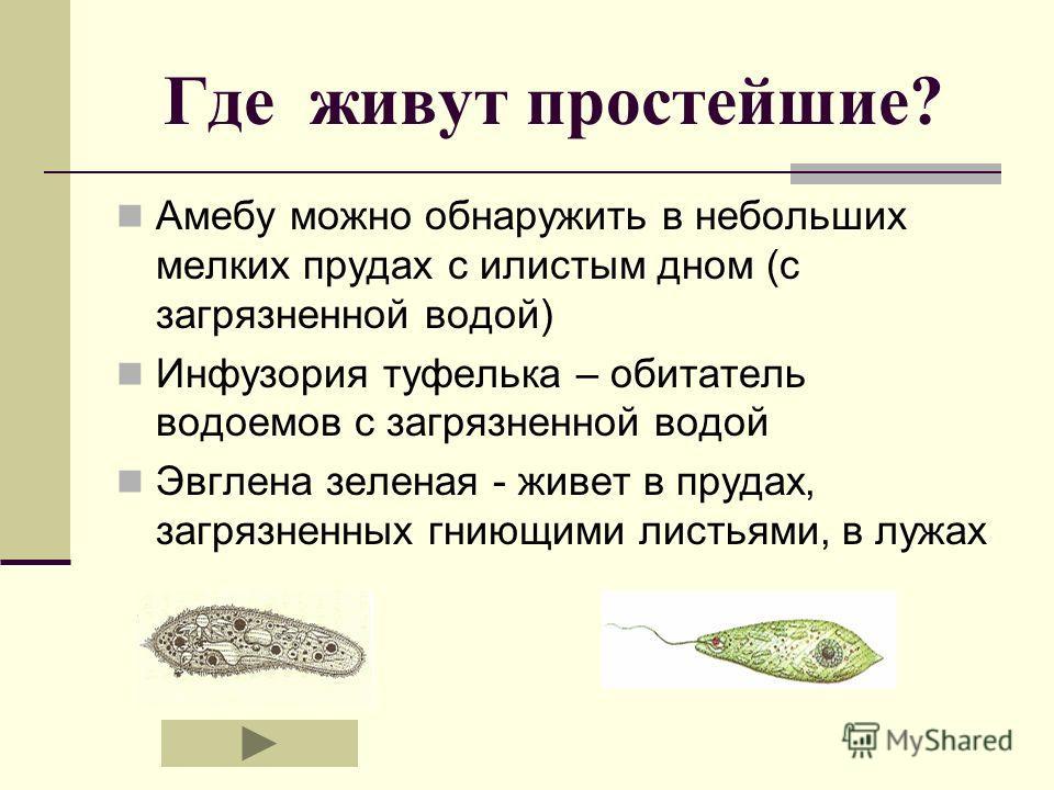 Где живут простейшие? Амебу можно обнаружить в небольших мелких прудах с илистым дном (с загрязненной водой) Инфузория туфелька – обитатель водоемов с загрязненной водой Эвглена зеленая - живет в прудах, загрязненных гниющими листьями, в лужах