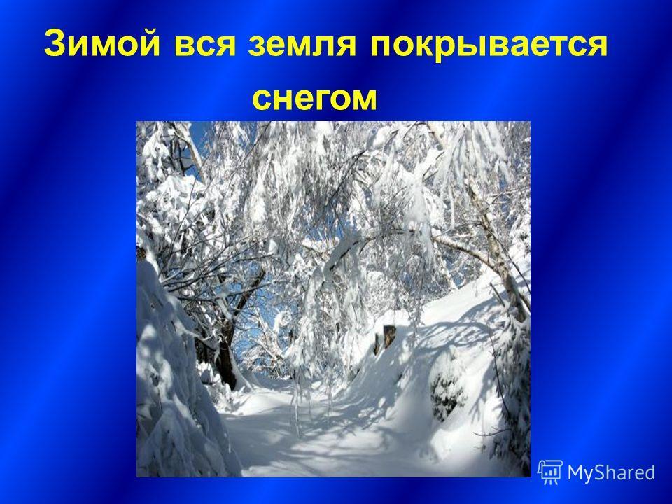 Зимой вся земля покрывается снегом