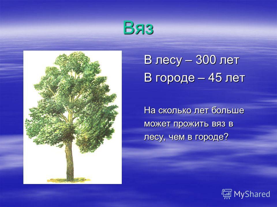 Вяз В лесу – 300 лет В городе – 45 лет На сколько лет больше может прожить вяз в лесу, чем в городе?