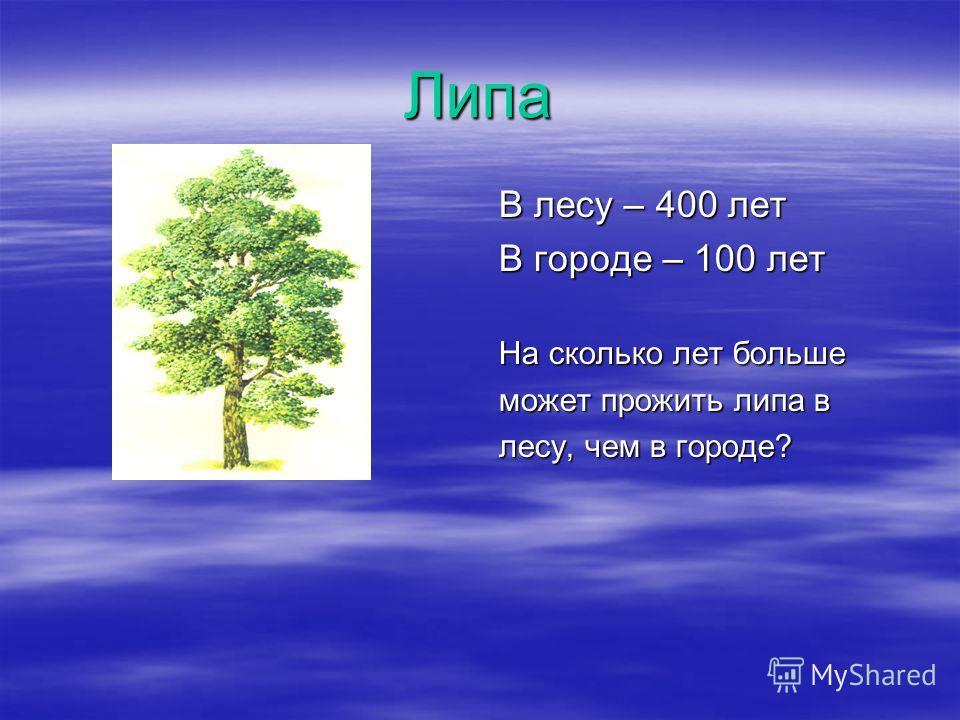 Липа В лесу – 400 лет В городе – 100 лет На сколько лет больше может прожить липа в лесу, чем в городе?