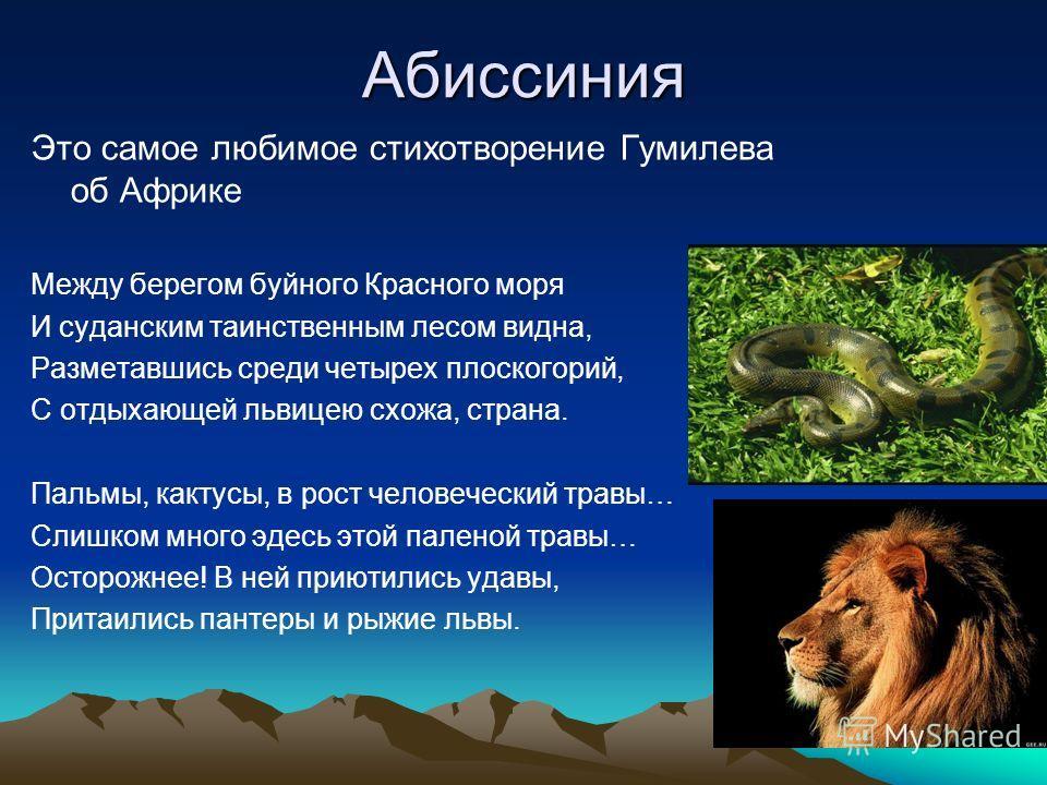 Абиссиния Это самое любимое стихотворение Гумилева об Африке Между берегом буйного Красного моря И суданским таинственным лесом видна, Разметавшись среди четырех плоскогорий, С отдыхающей львицею схожа, страна. Пальмы, кактусы, в рост человеческий тр