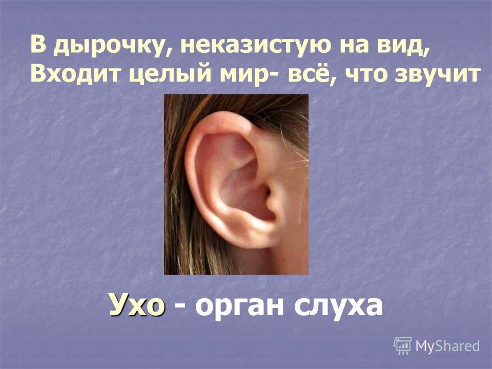 В дырочку, неказистую на вид, Входит целый мир- всё, что звучит Ухо Ухо - орган слуха