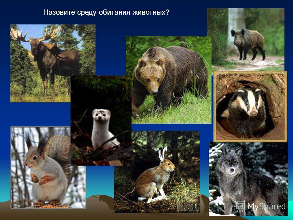 Назовите среду обитания животных?
