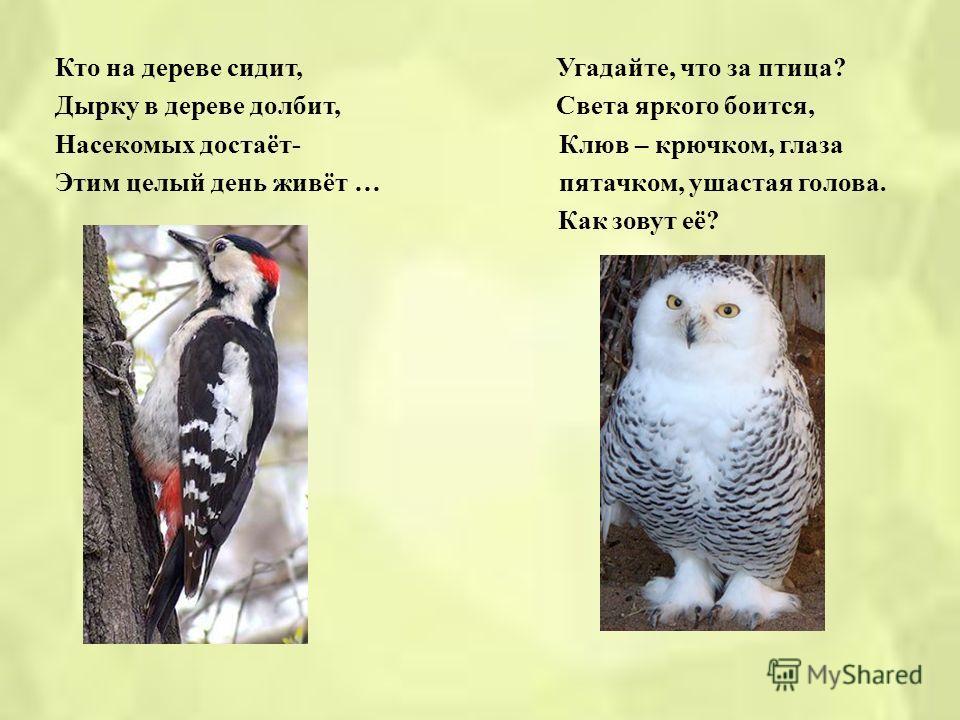 Задание 5 « Отгадай - ка » Как лиса среди зверей, Угадай, какая птица, Эта птица всех хитрей. Бойкая, задорная, Прячется в зелёных кронах, Ловкая, проворная, А зовут её … Звонко тенькает : « Тень, тень ! Как хорош весенний день !»