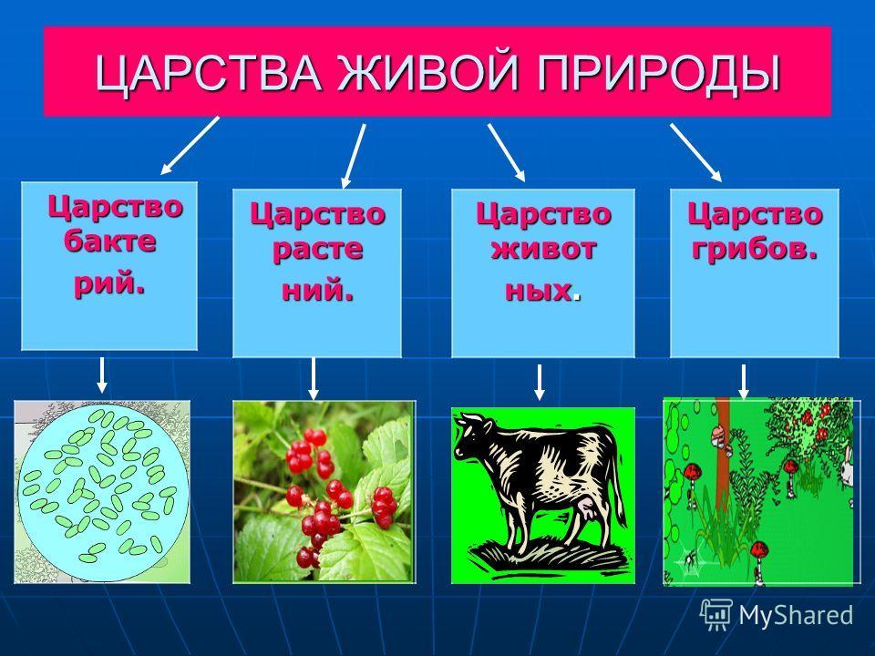Царство расте ний. Царство бакте Царство бактерий. Царство живот ных. Царство грибов.
