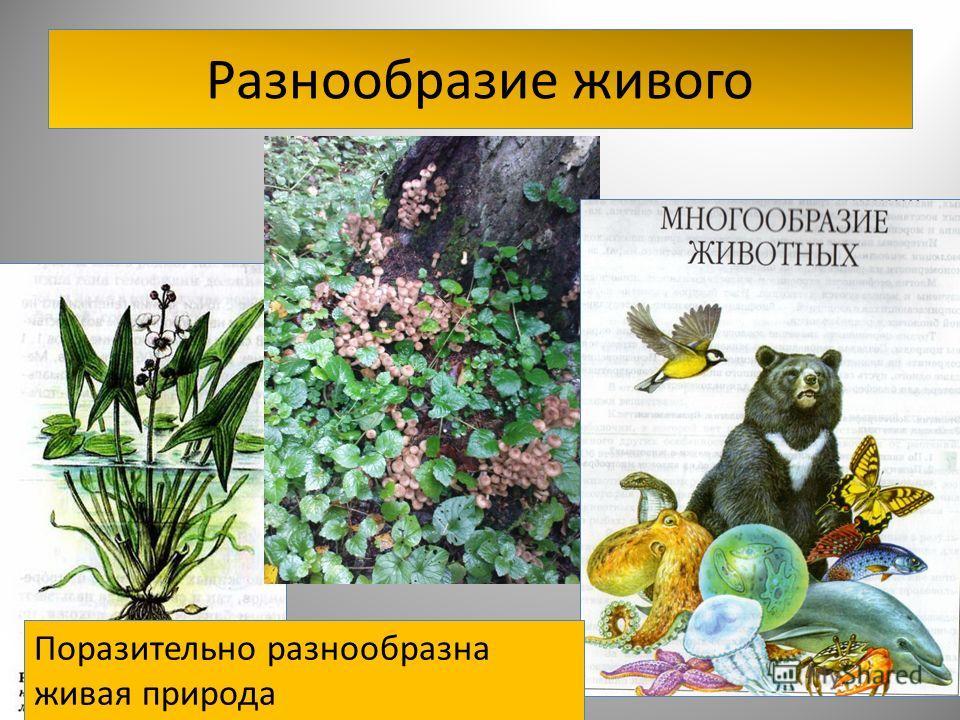 лечение грибами лисичками от паразитов